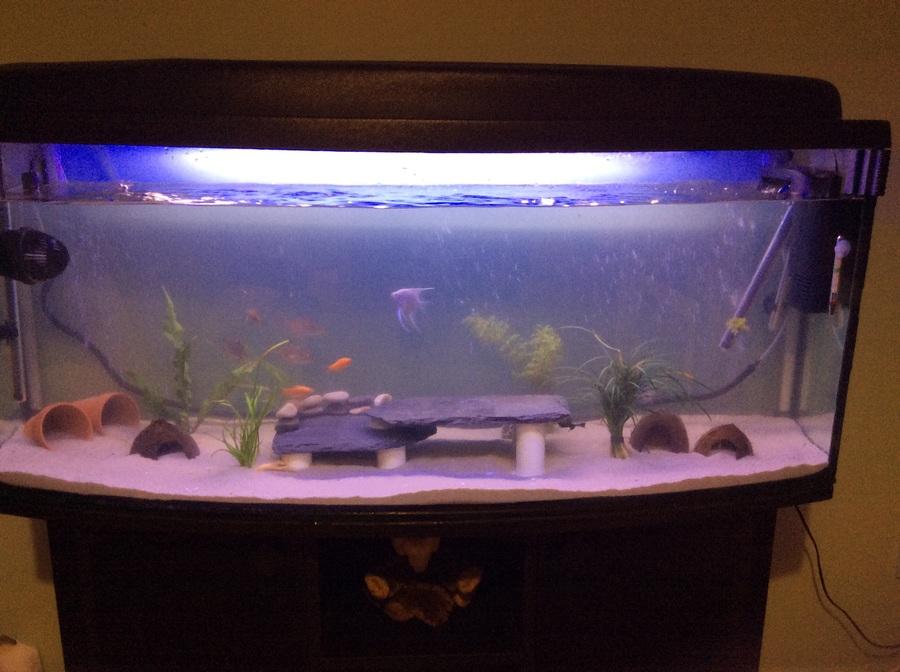 Need help my aquarium club for Bacterial bloom fish tank