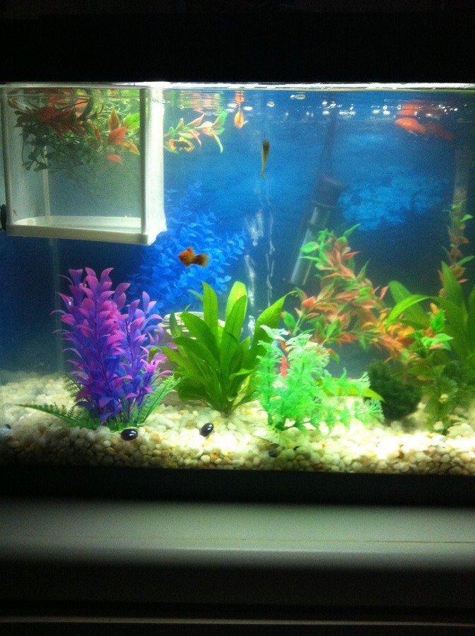 Is it normal to have a cloudy tank when your treating it for Ick in fish tank