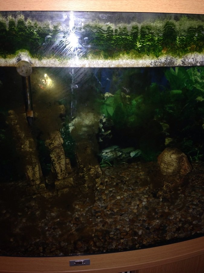 Fish tank with stagnant water in for years my aquarium club for Fish tank stinks