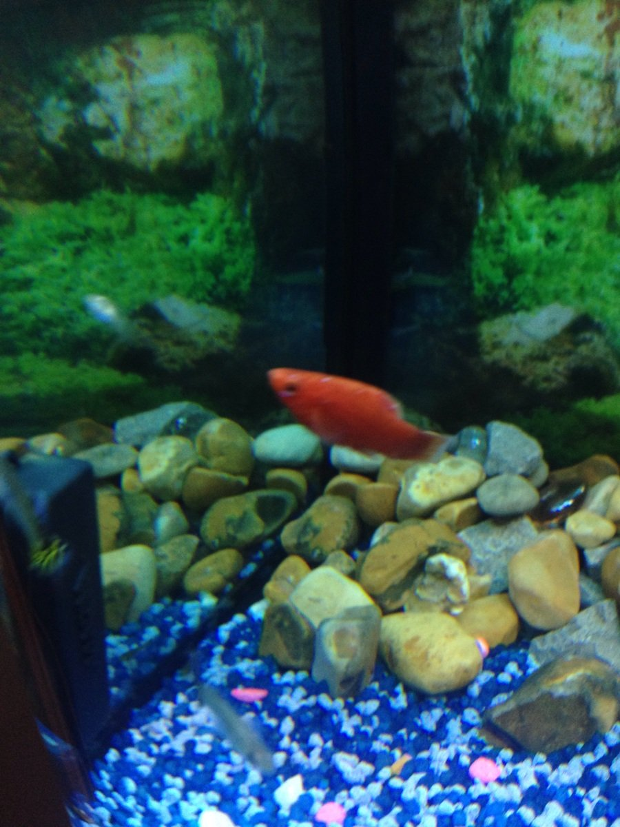 My Fish Look Sick My Aquarium Club