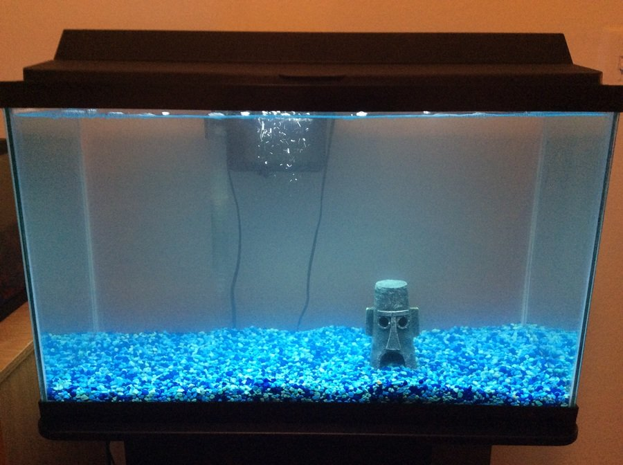 Cloudy water during fishless cycle my aquarium club for My fish tank water is cloudy