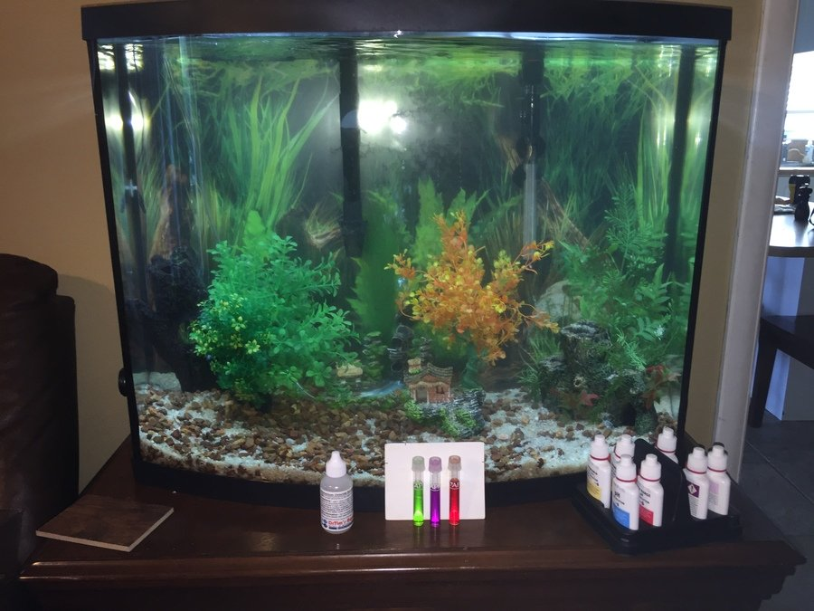 Fishless Cycle For 4 Weeks On 38 Gallon Bowfront Crazy