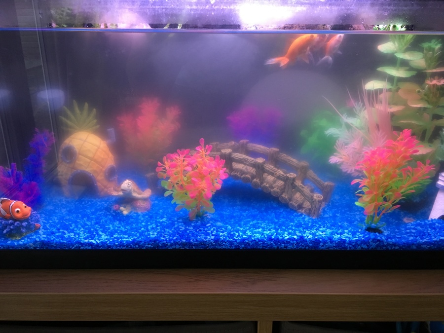 Cloudy water and fish at top of tank help my aquarium for My fish tank water is cloudy