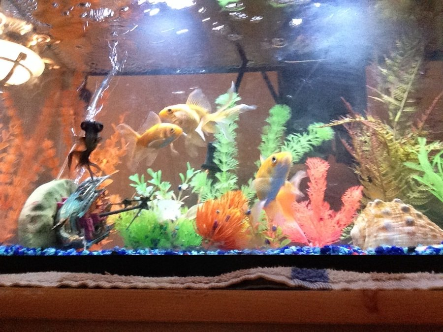How can i get rid of cloudy water without doing water for My fish tank water is cloudy