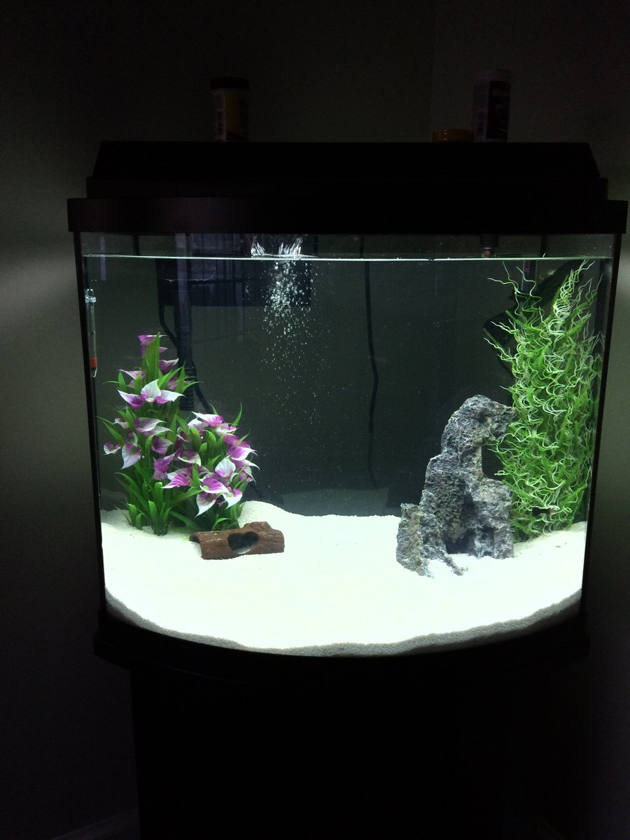 Aquarium fish 5 gallon tank - This Response Was Given To A User Who Wanted To Know How To Transfer The Water Gravel From A 10 Gallon Into A New 20 Gallon Tank With The Least Disruption
