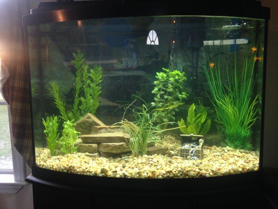 Angles and discus my aquarium club for Aquarium angle