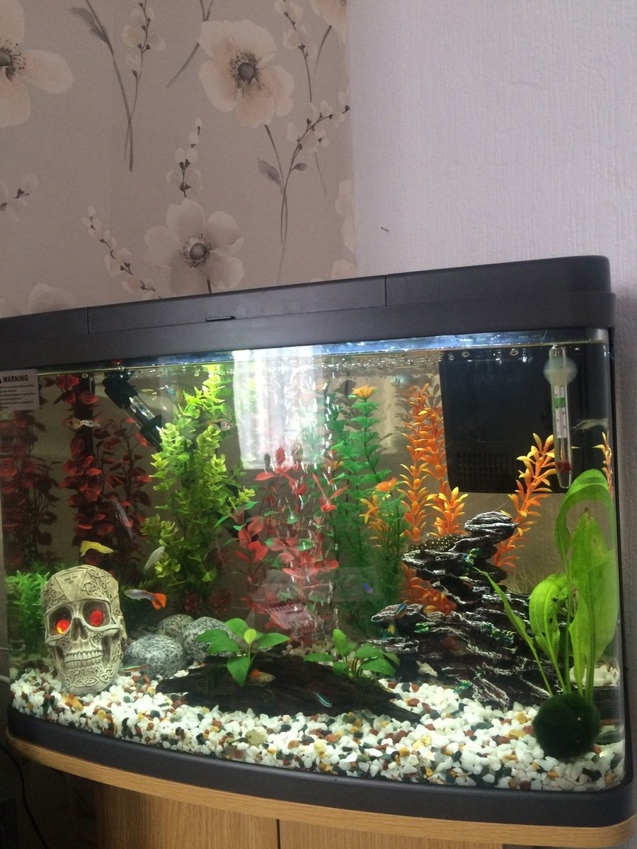 Freshwater aquarium fish no heater - Okay So I Have Had A Fully Established Tank For Over A Year 90l Tropical Tank Containing A Snowball Plec Red Tailed Shark