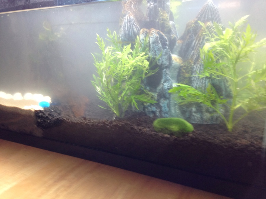 Cloudy water from planted aquarium substrate my aquarium for Foggy fish tank