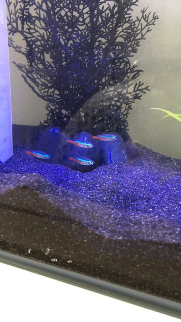 Freshwater aquarium fish dying after water change - Thanks