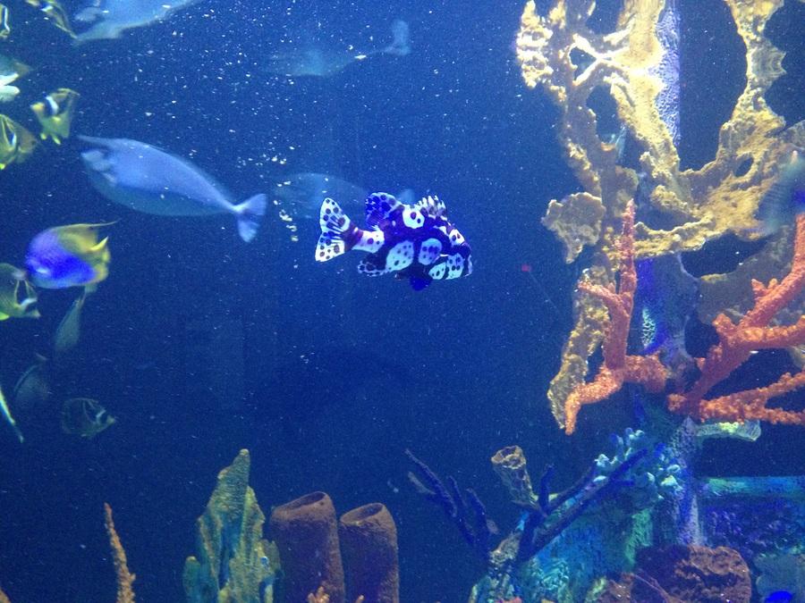 Great Lakes Aquarium My Aquarium Club