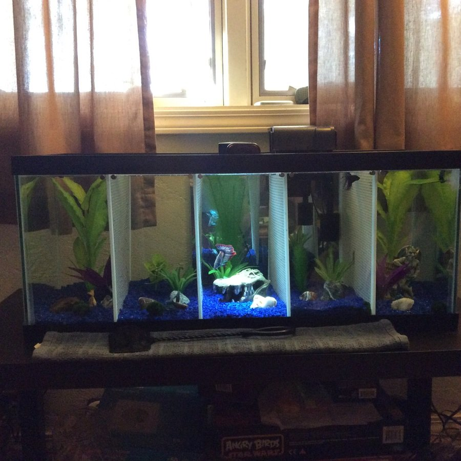 Tank set up i 39 ve set up a 20 gallon long divided to house for 2 gallon betta fish tank
