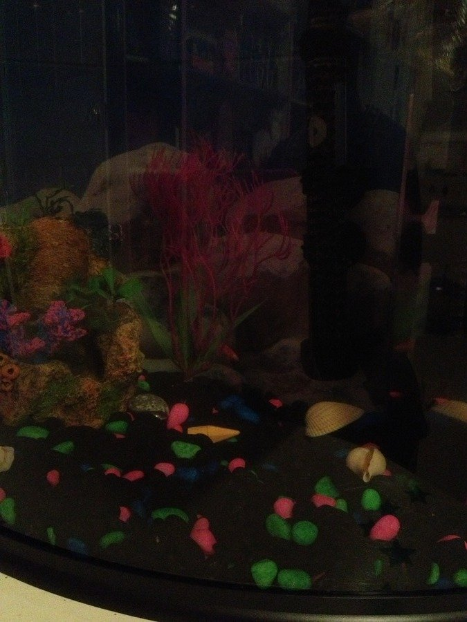 Cycling my 5 gallon tank with fish my aquarium club for Cycling a fish tank