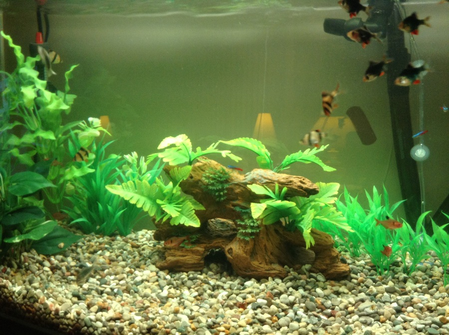 New To Aquariums Have 46 Gal With A Marineland C530 ...