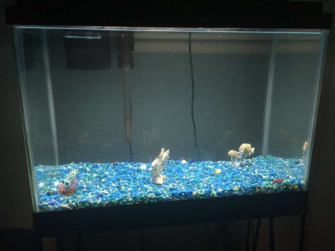 Freshwater aquarium fish keep dying - We Have An Algee Eater In The Tank But He Died Yesterday Is It The Water What Are Some Tips To Keeping Fish Alive And Healthy