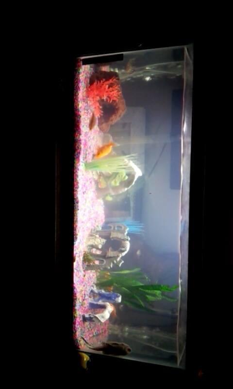 Mixing goldfish and some tropical fish my aquarium club for Best freshwater aquarium fish combination