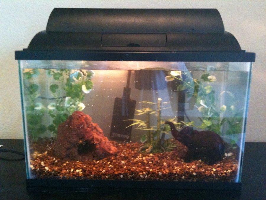 Filter my aquarium club for Do betta fish need a filter