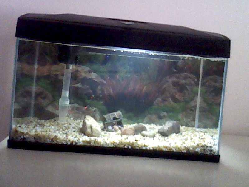 I have 4 goldfish and they got to big in their new tank so for Aquarium 50l