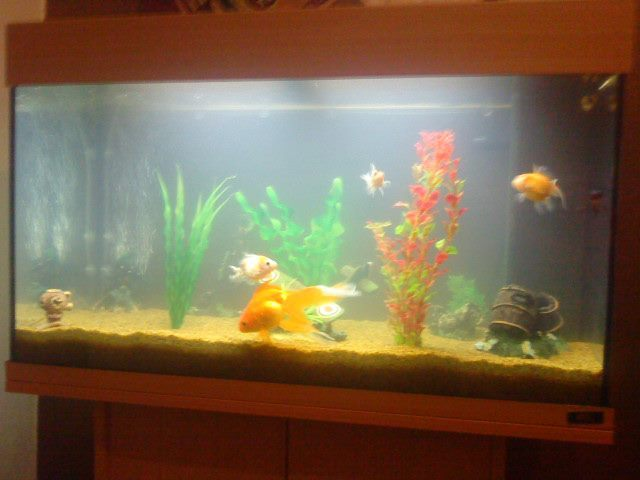 juwel rio gold fish aquarium mixed my aquarium club. Black Bedroom Furniture Sets. Home Design Ideas