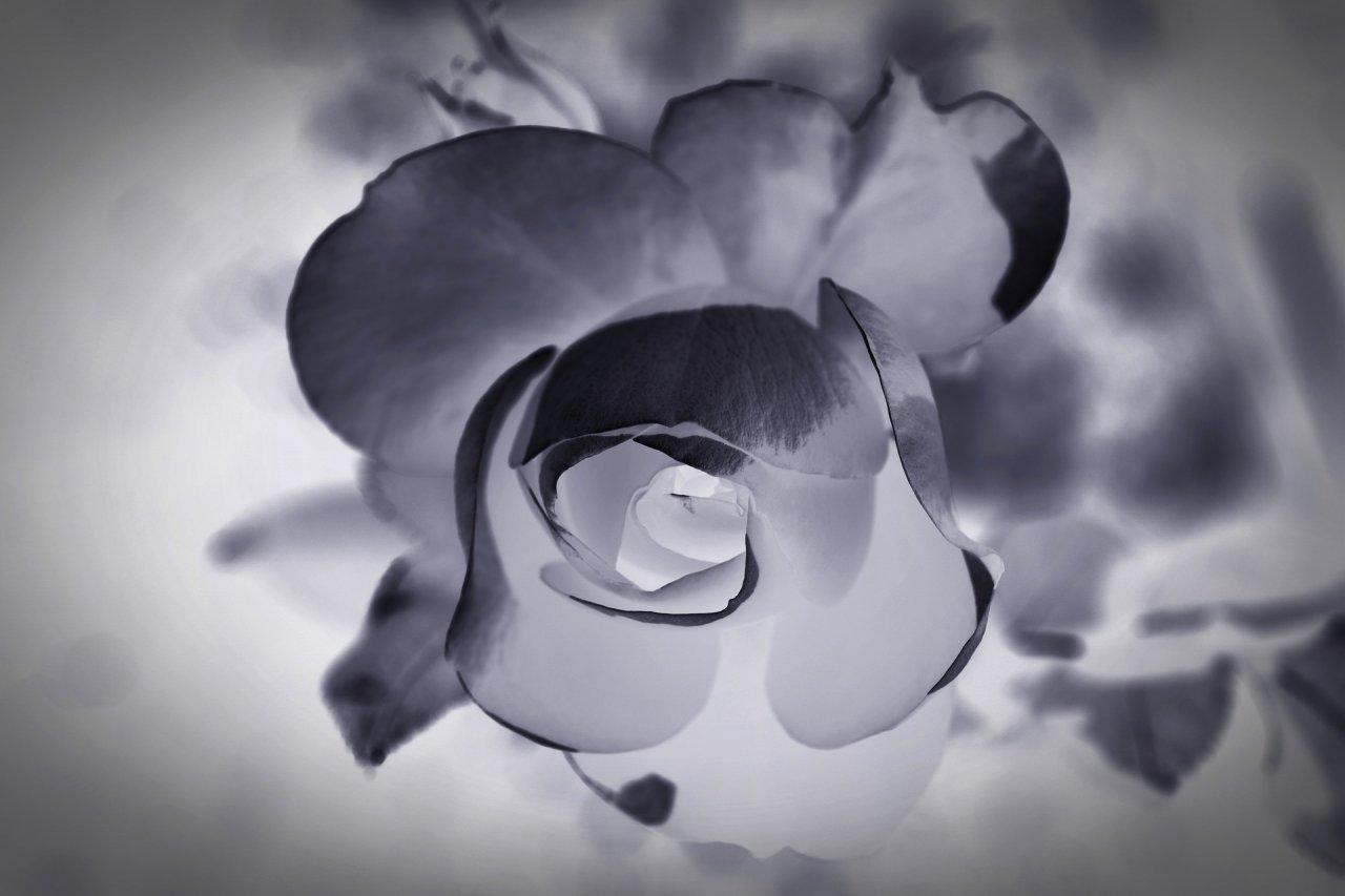 mourning-1665772_1920-dolkb75flt.jpg