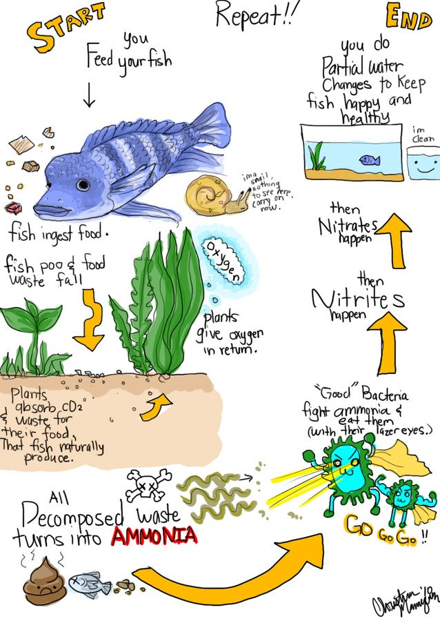 nitrogen cycle in a fish tank