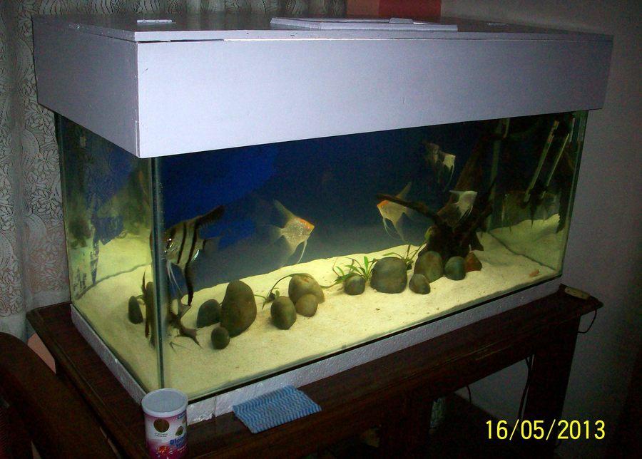 DIY Fish Tank Canopy | My Aquarium Club