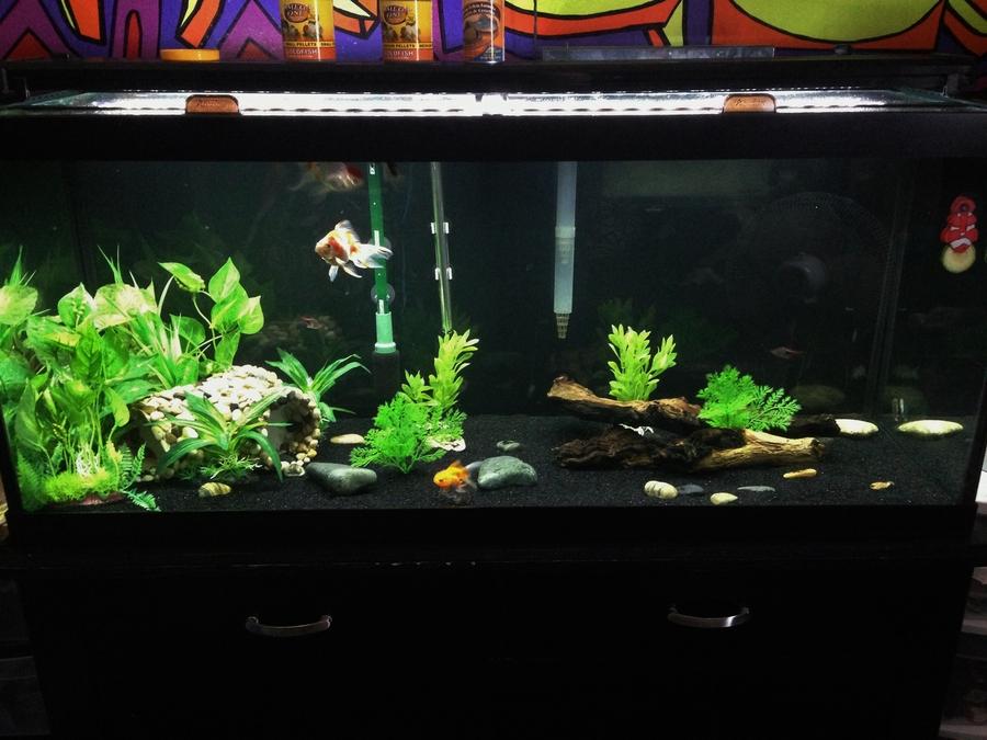 75 Gallon Goldfish Aquarium | My Aquarium Club