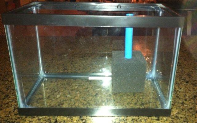 How To Make An Effective DIY Sponge Filter For Your Aquarium | My Aquarium Club
