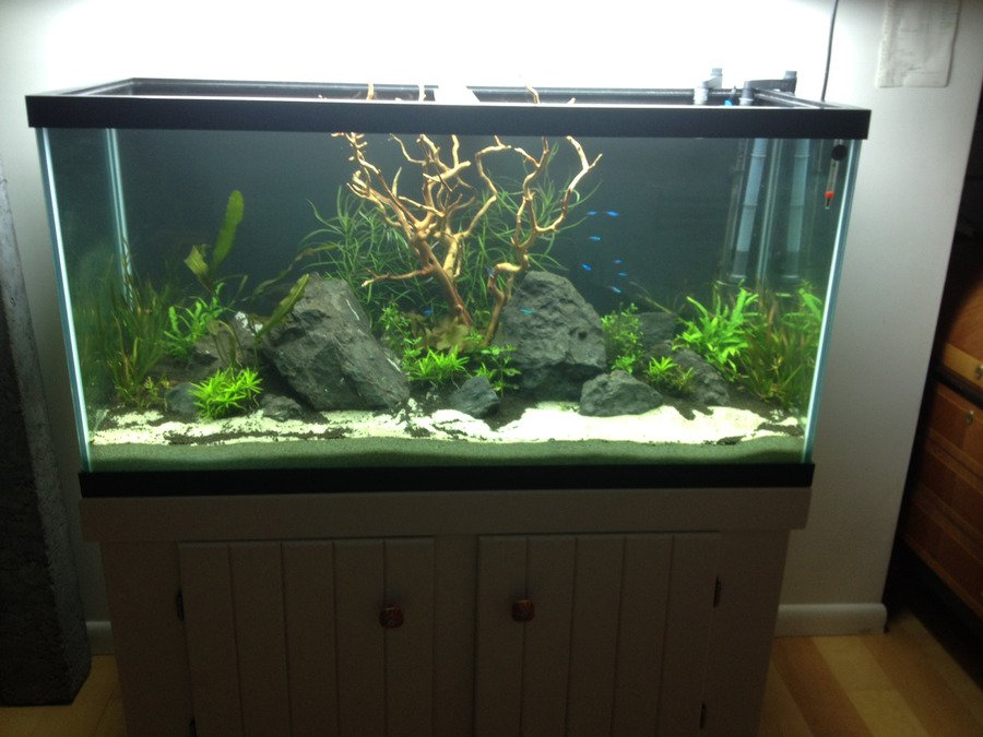 How to paint the background of your fish tank black my for Aquarium decoration paint
