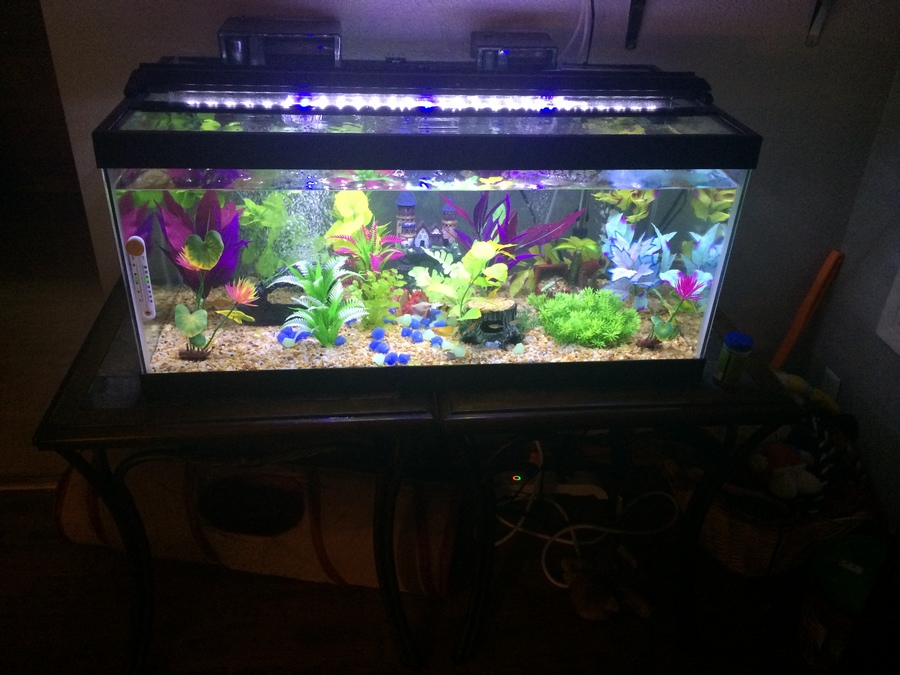 Pictures Of The Tanks That I Have. | My Aquarium Club