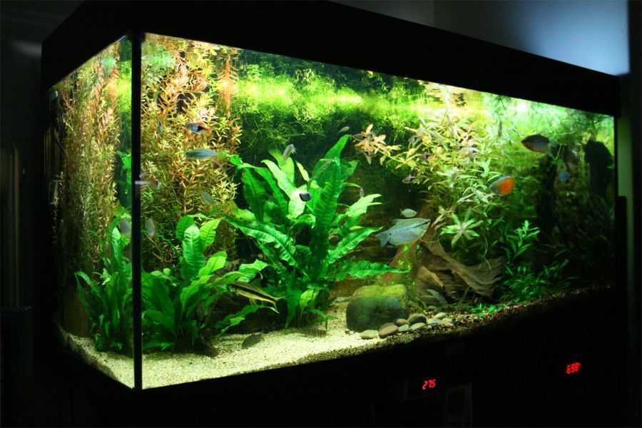 High Quality South American Biotope