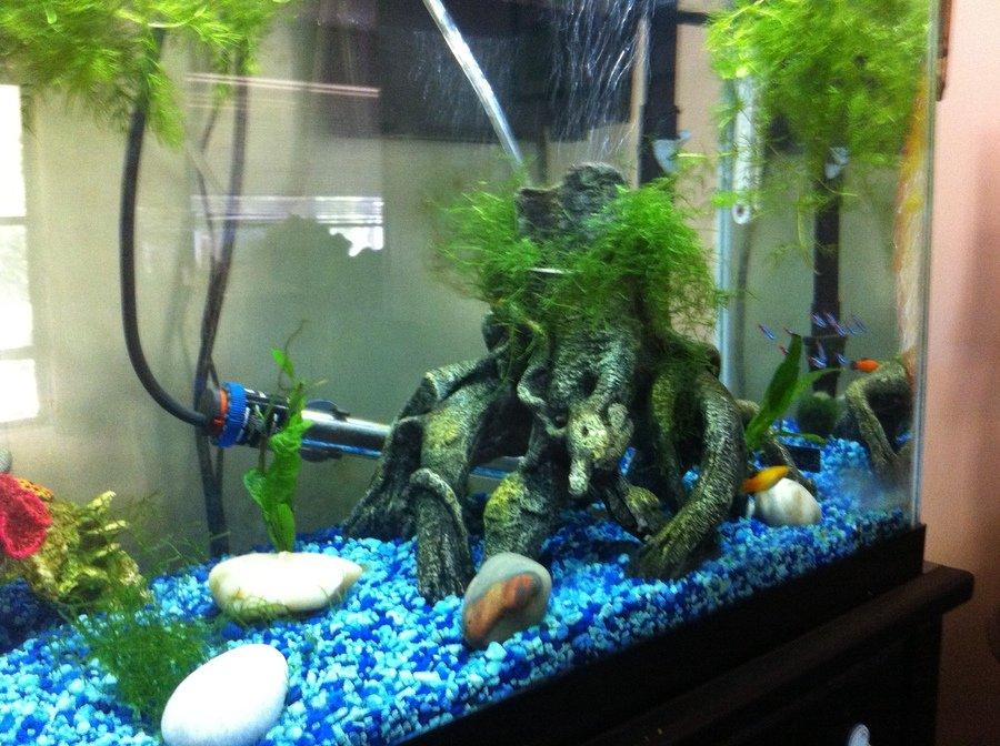 Heater placement my aquarium club for Best fish tank heater