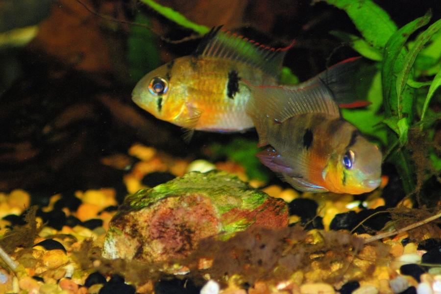 Debcc S Blog My Aquarium Club