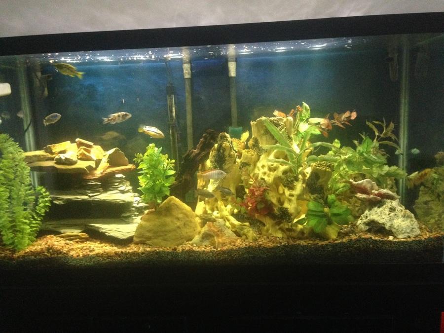 DIY Cichlid Caves | My Aquarium Club