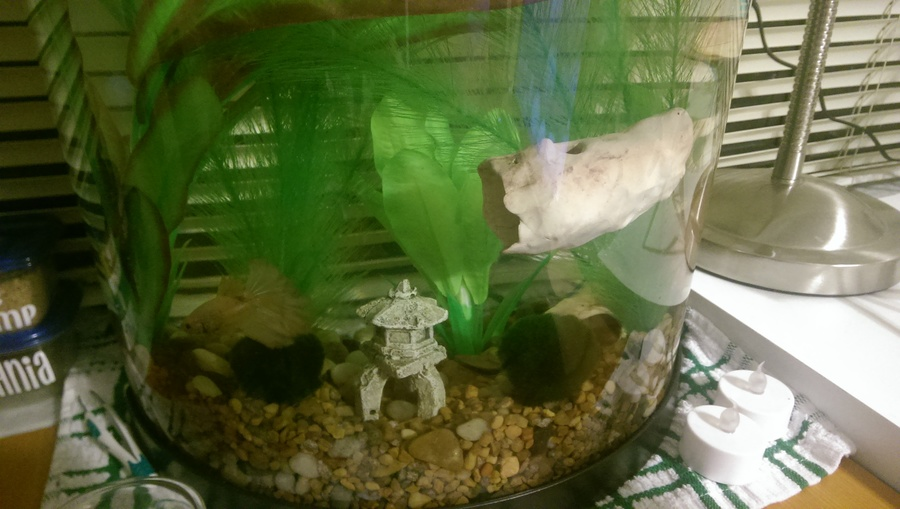 Diy Clay Caves Houses Tunnels Etc For Your Betta Or Any Other