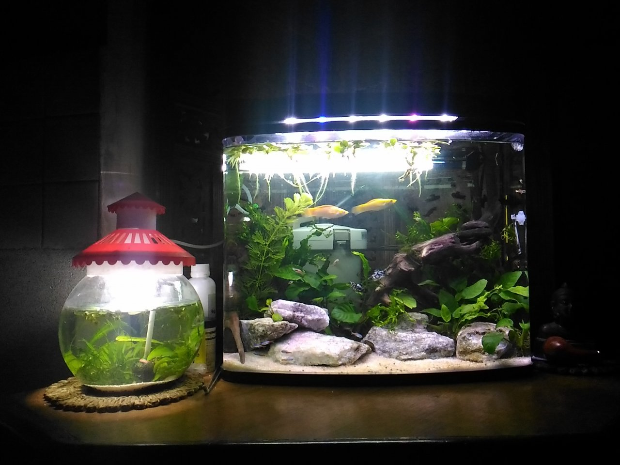 stocking ideas for planted pico and nano tanks 20 gallons or less my aquarium club. Black Bedroom Furniture Sets. Home Design Ideas