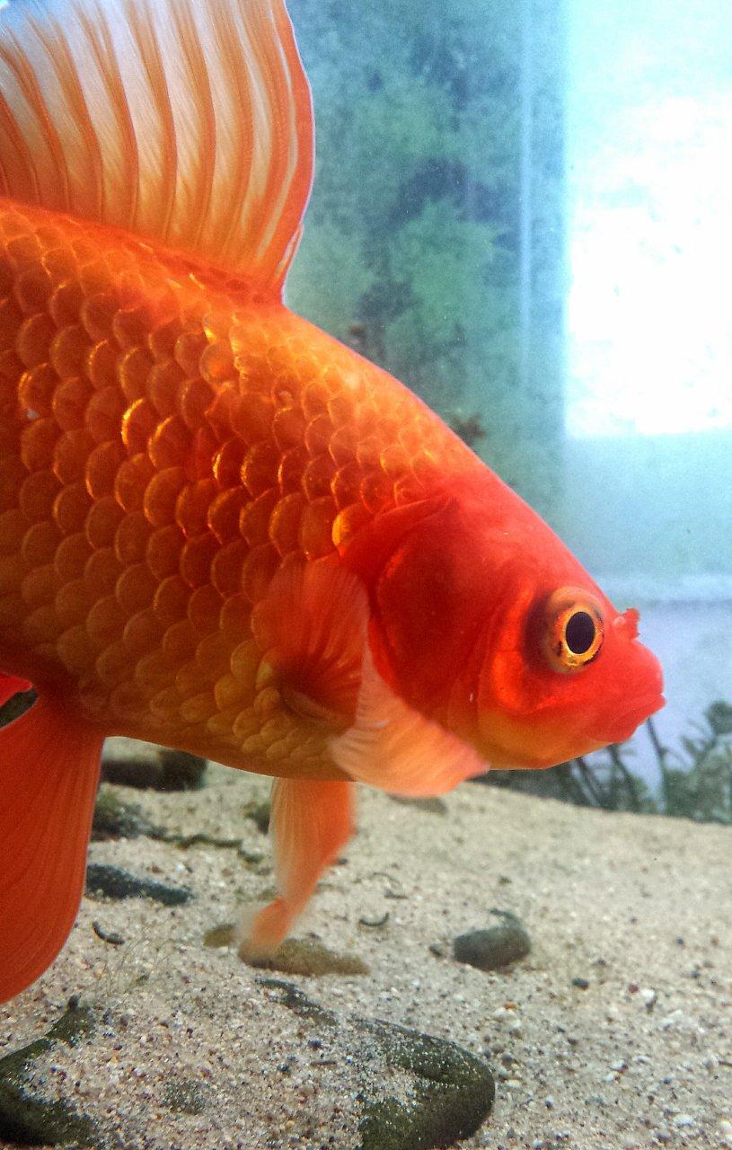 Top Blogs | My Aquarium Club
