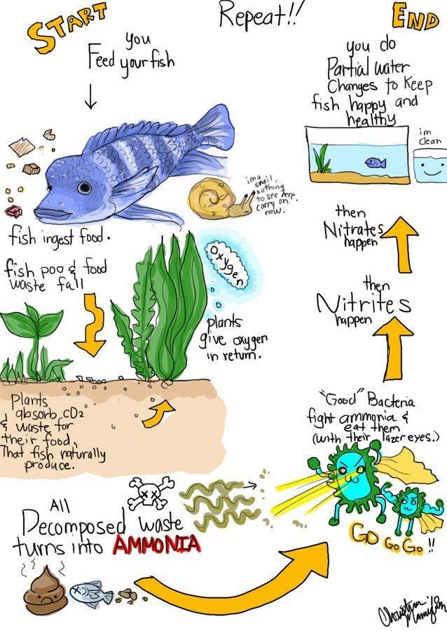 The Aquarium Nitrogen Cycle For Everyone
