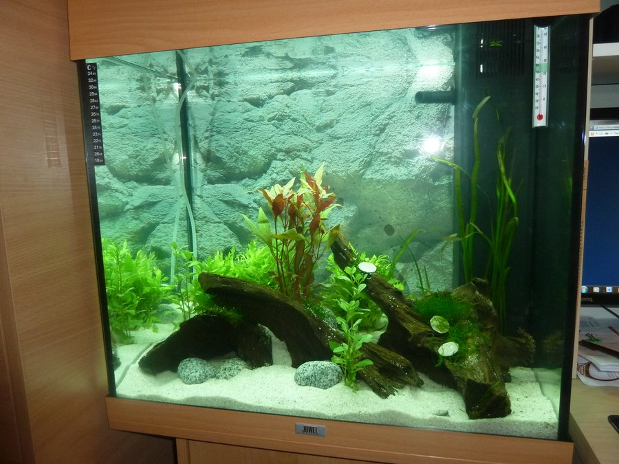 hi i have just set up a juwel lido 120 litre tank i have set up the tank my aquarium club. Black Bedroom Furniture Sets. Home Design Ideas