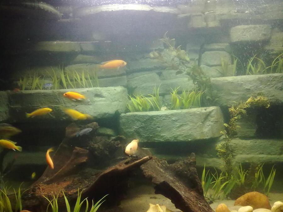 Christi's Blog | My Aquarium Club