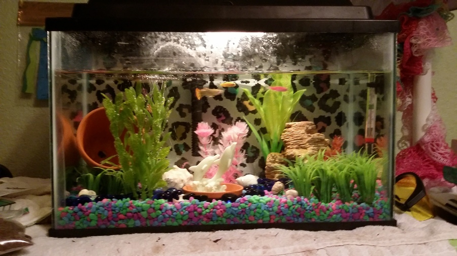 Cheap Diy Aquarium Background My Aquarium Club