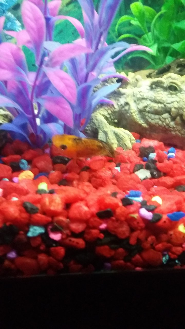 Why Am I Losing Fish This Fast? | My Aquarium Club