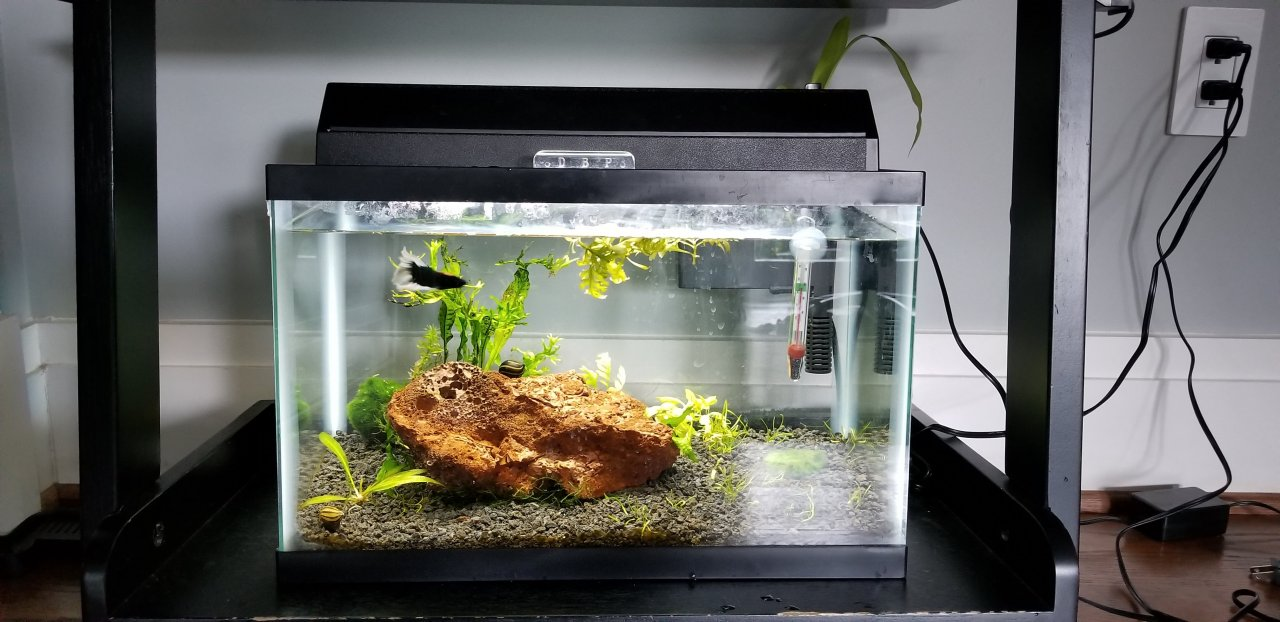 light led diy watch lighting aquarium youtube dimmable