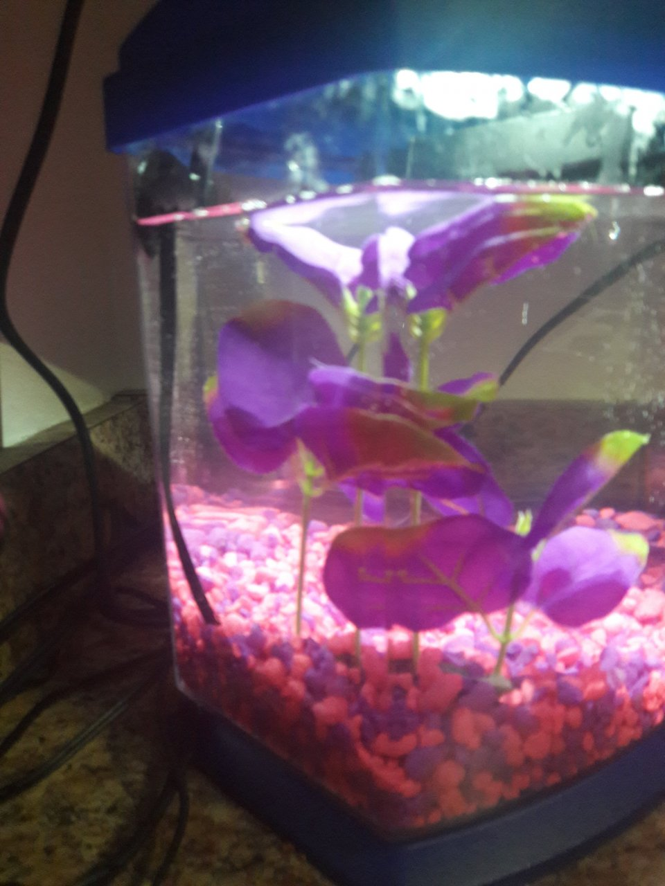 how to clean fish tank after beta dies