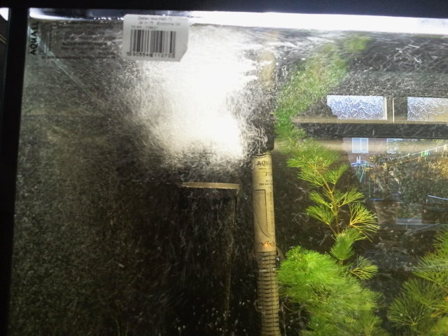 I Put Some Anti Fungus And Finrot Treatment In My Tank With The
