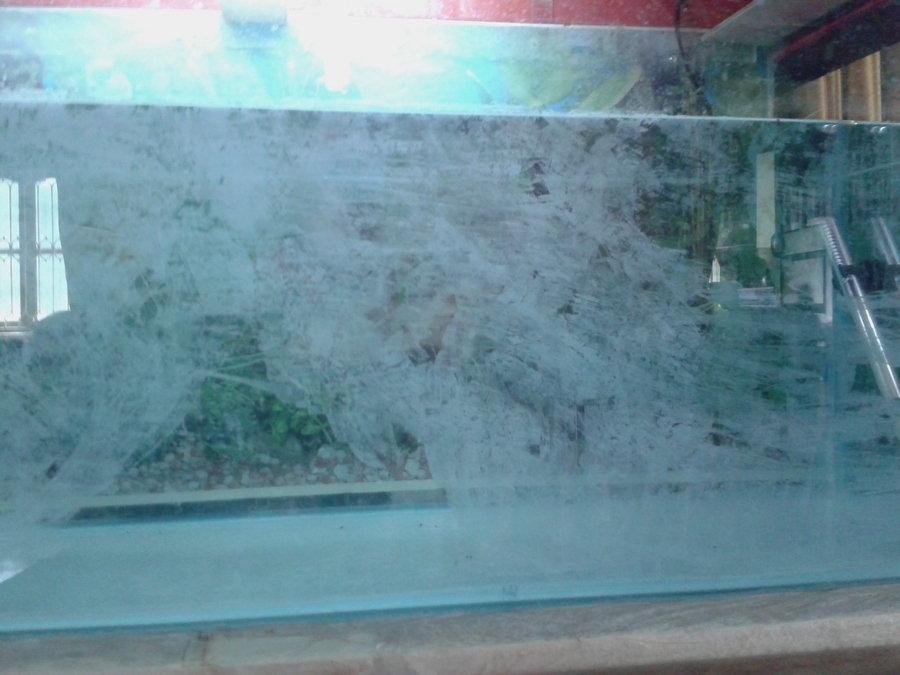 White cloudy spot on aquarium glass my aquarium club for My fish tank water is cloudy