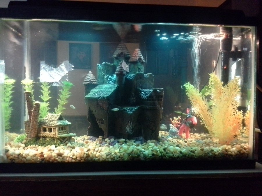 how to clean your fish tank glass