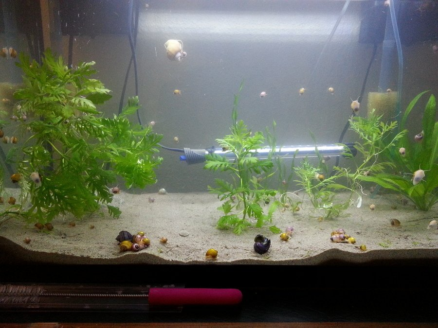 Can you use beach sand in a freshwater aquarium my for Black sand fish tank