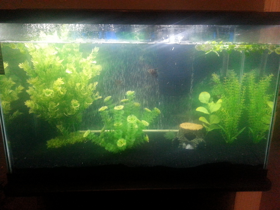 Homemade Streak Free Aquarium Glass Cleaner! (Can Be Used For ...