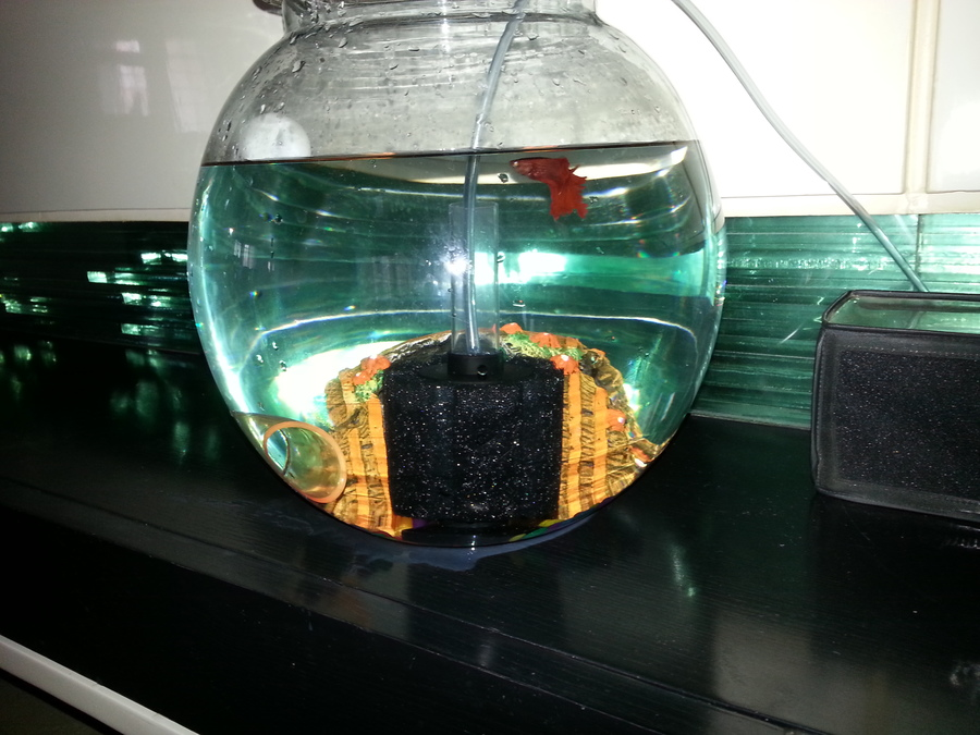 setting power of sponge filter for betta in a 3 gallon bowl? | my ...
