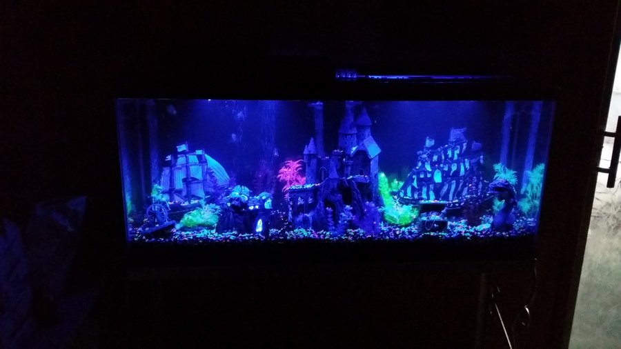Just Finished My 55 Gallon Glofish Tank How Many Could I ...